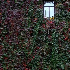 Cactus Window in Autumn