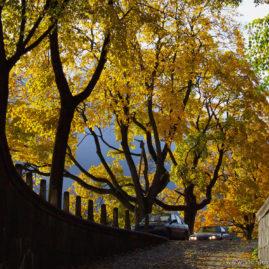 Fall Trees by Nemunas River
