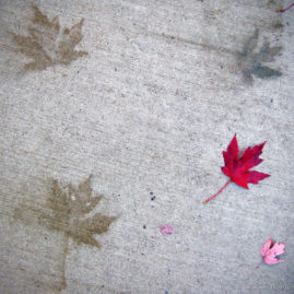Maple Tracks