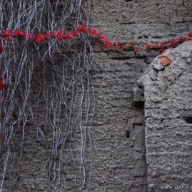 String of Red Ivy