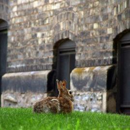 Rabbit and Three Windows
