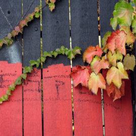 Gray & Orange Fence with Ivy