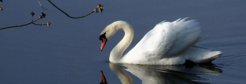 Swan slider