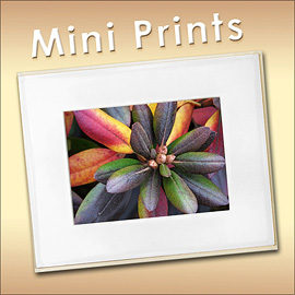 Mini Prints in our Shop