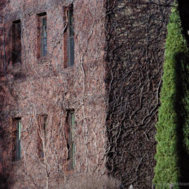 Winter Ivy Wall