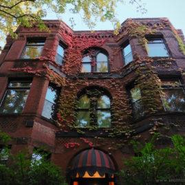 Laurel Flats – Autumn Ivy