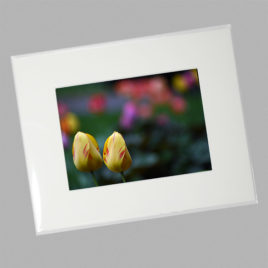 Olympic Flame Tulips (Mini)