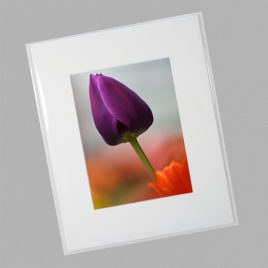 Purple Tulip (Mini)