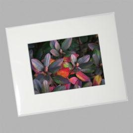 Rhododendron Bush (Mini)